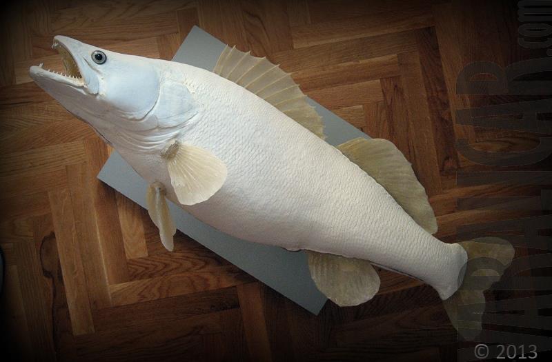 cutstom fish replica zander smudj