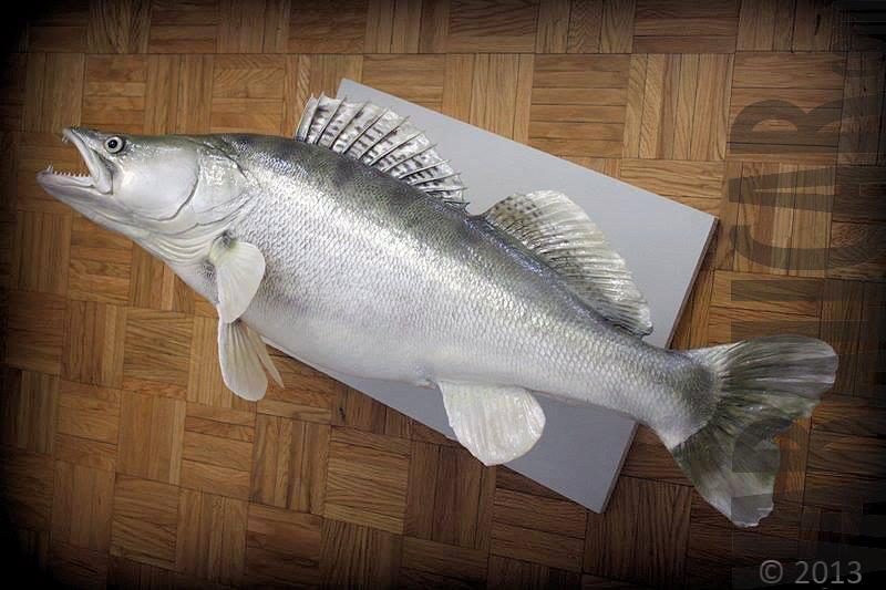 cutstom fish replica zander smudj_1