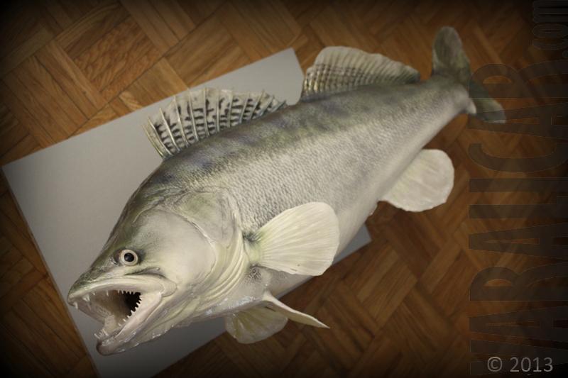 cutstom fish replica zander smudj_2