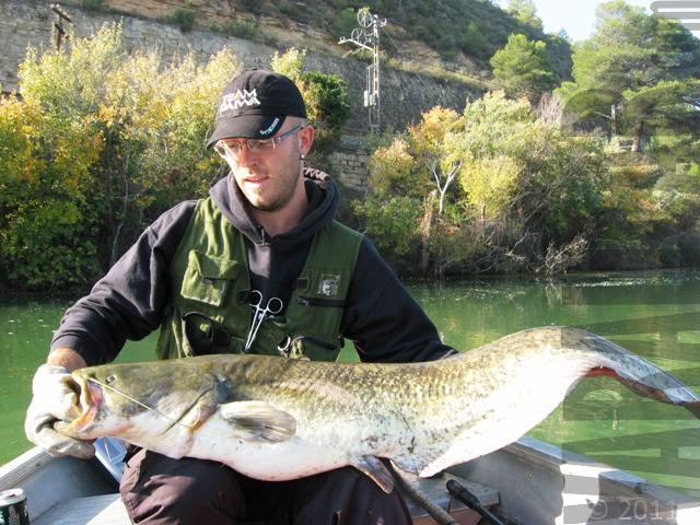 rio ebro spain wels catfish silurus glanis