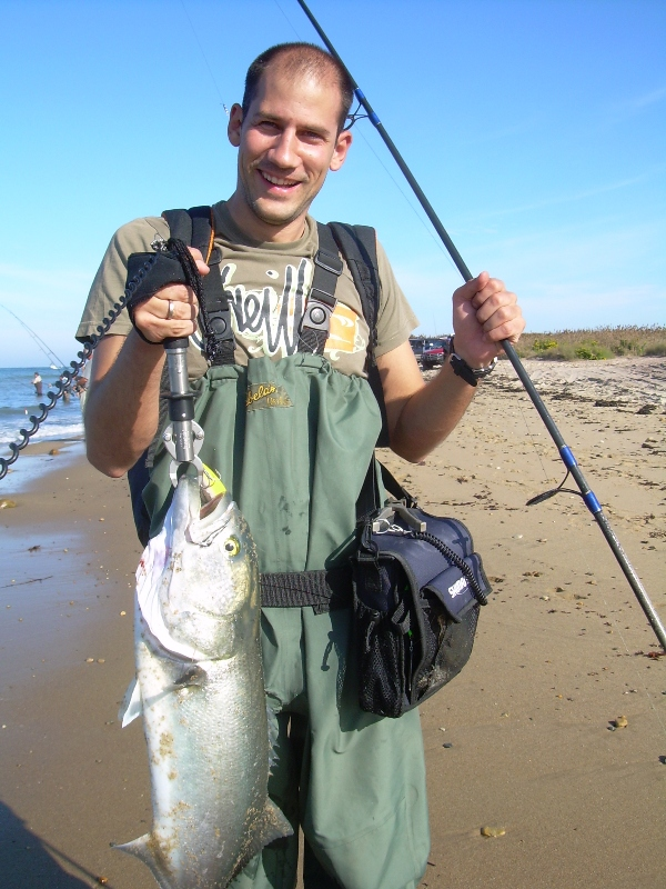 zubatica_bluefish_NY_2
